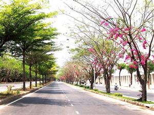 Lượn lờ qua những con phố ngập tràn hoa ở Sài Gòn