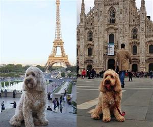 Cuộc sống đáng ghen tỵ của nàng chó du lịch khắp thế giới